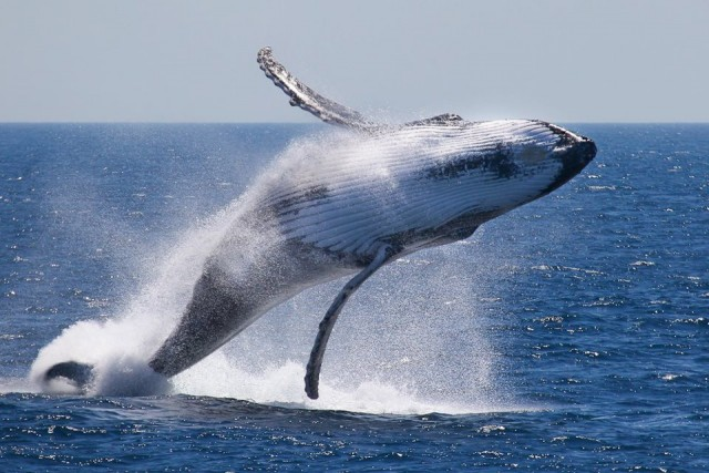 The Wall Street Journal And Whales